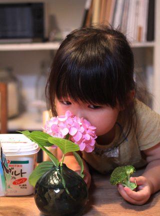 紫陽花とブロッコリーの匂いを嗅ぐ